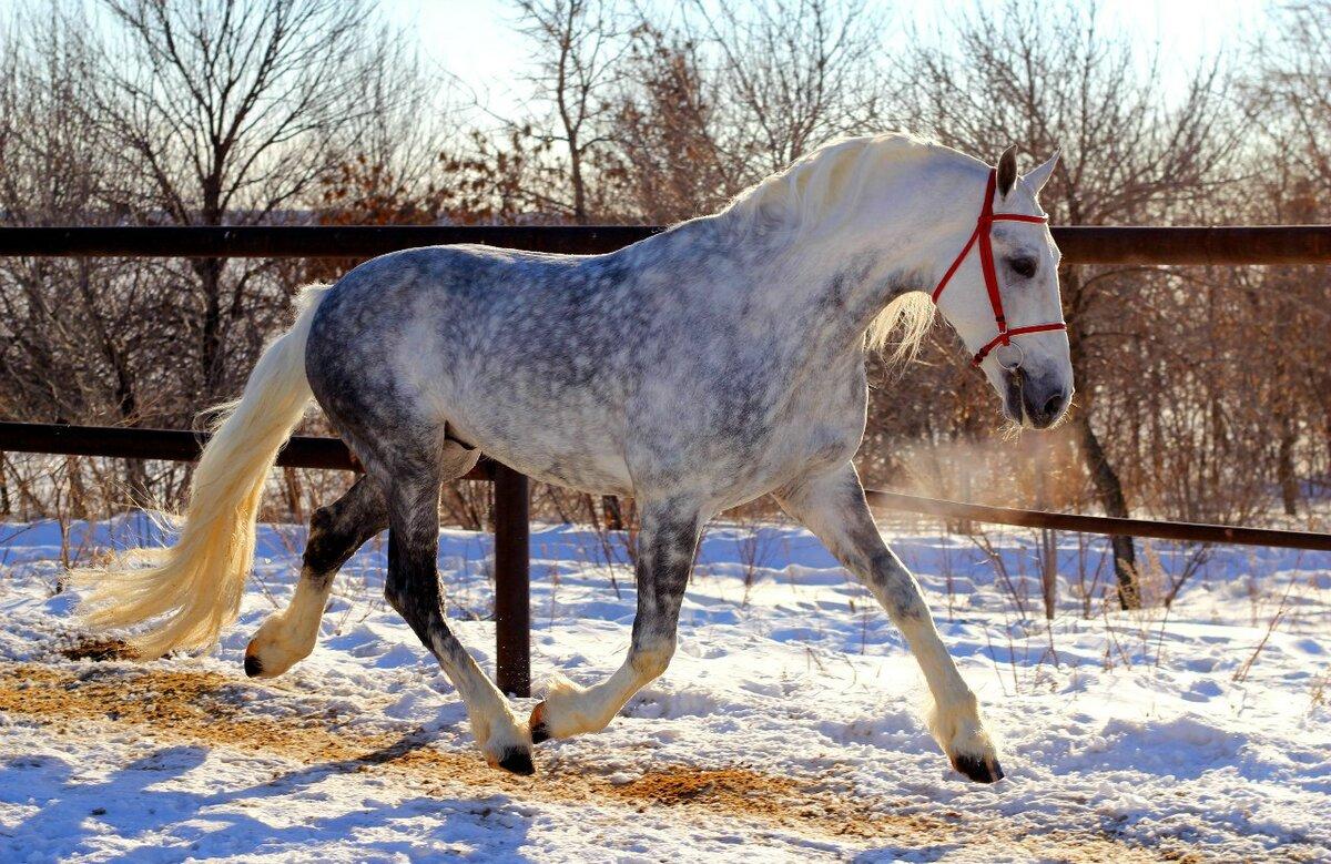 Лошади алтайского края: характеристика алтайской и новоалтайской пород коней, их содержание