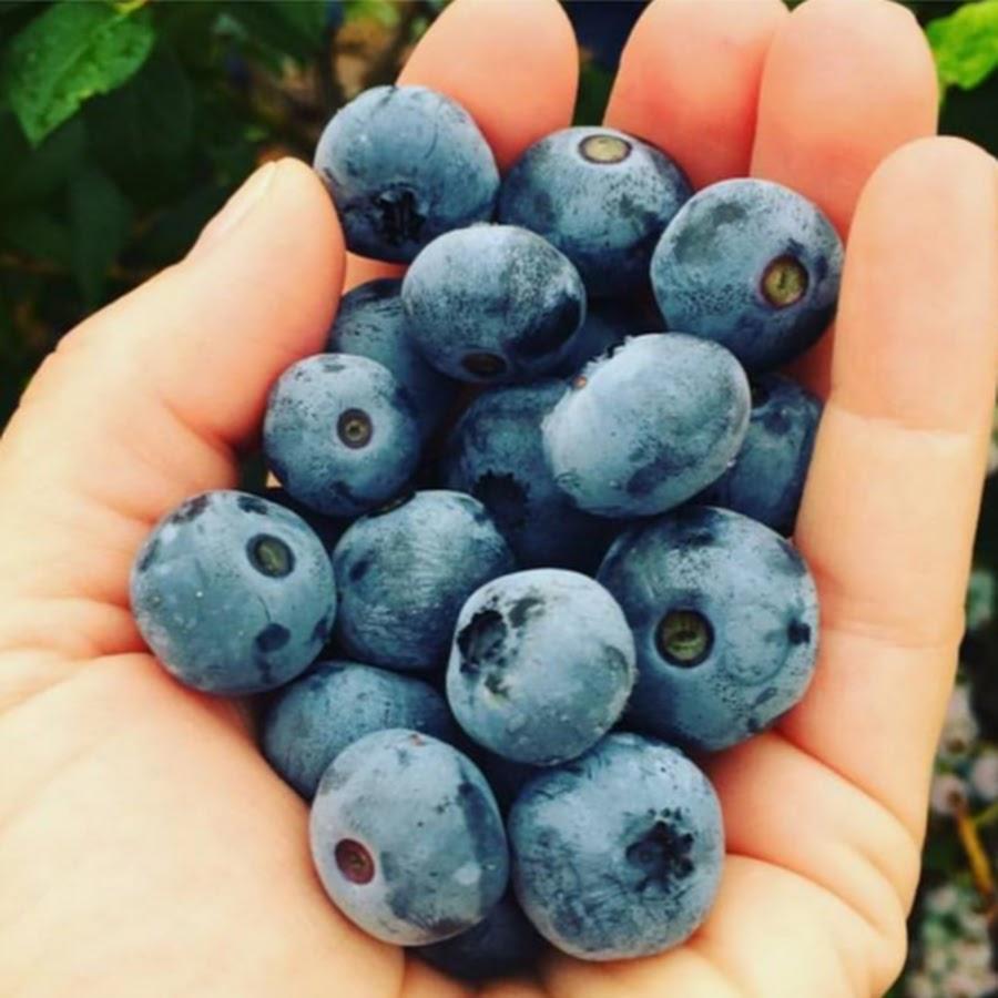 Какие ягоды можно выращивать в домашних условиях