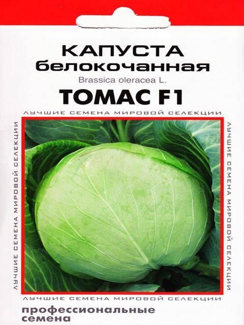 Лучшие сорта белокочанной капусты для посева на ваших грядках: список с фото