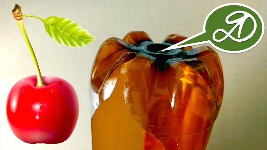 Обрезка черешни: видео инструкция и 110 фото как правильно обрезать фруктовые деревья. когда проводится обрезка черешни