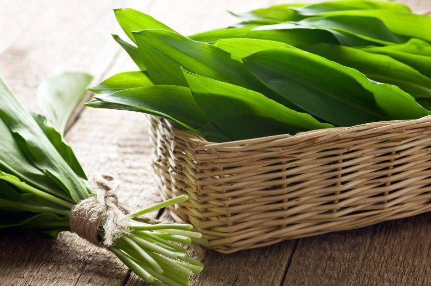 Черемша: использование, полезные свойства и выращивание в огороде