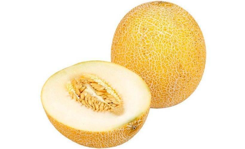 Некоторые правила прививания бахчевых культур или как прививать арбуз на тыкву