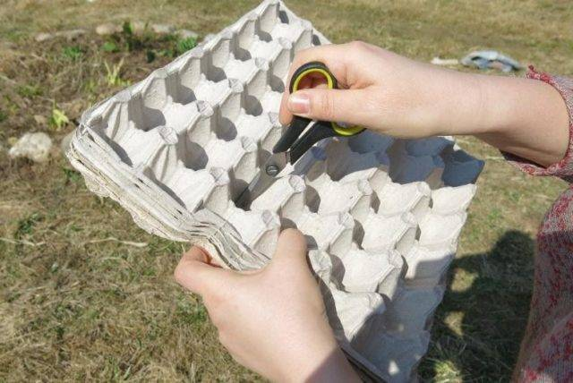 Как быстро посадить редис на огороде. простой способ с яичными лотками