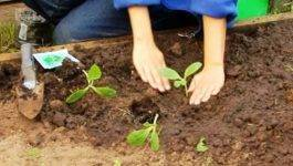 Выращивание рассады кабачков: посадка, уход, высадка