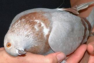 Болезни кур: подробный перечень куриных болезней