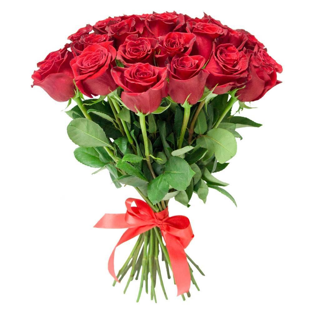 Об алых розах: описание и характеристики лучших сортов ярко красных роз