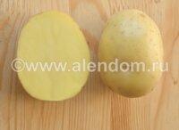 Вкусный и урожайный картофель бельмондо: описание сорта, характеристики и фото