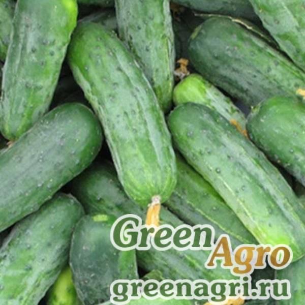 Огурец гоша f1: описание раннего высокоурожайного гибрида-корнишона