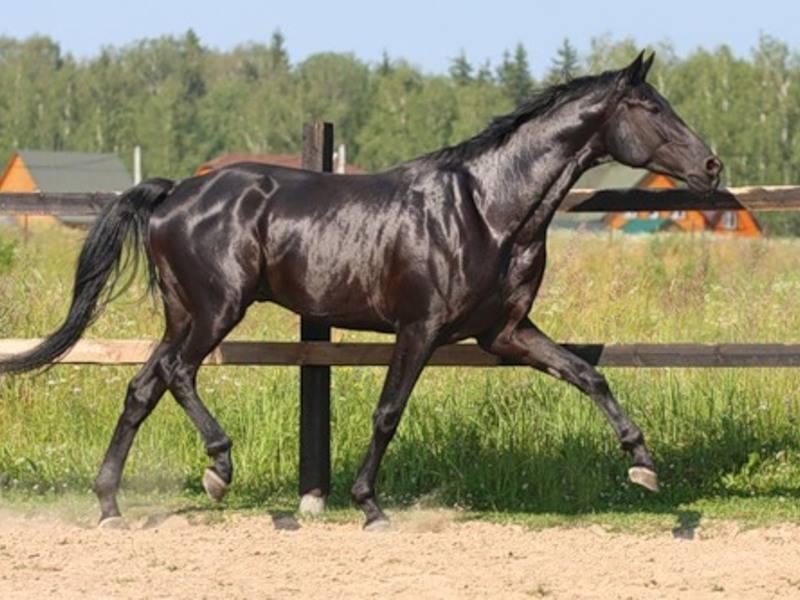 Лошадь боком бежит