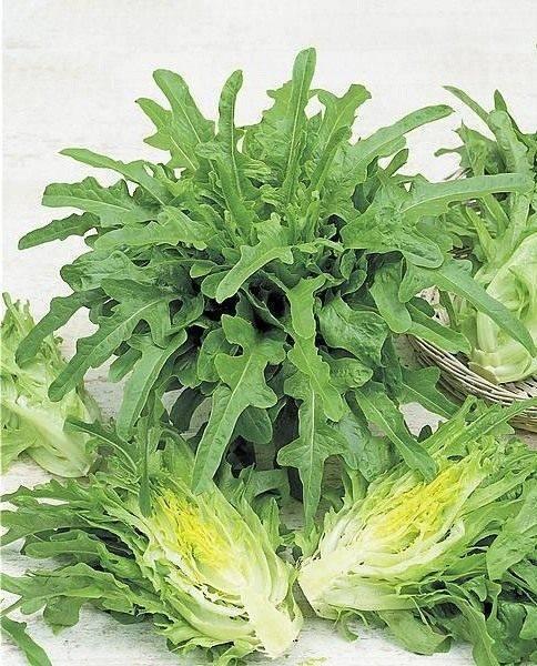 Что такое кресс-салат и как его едят: описание, польза и вред для организма, применение