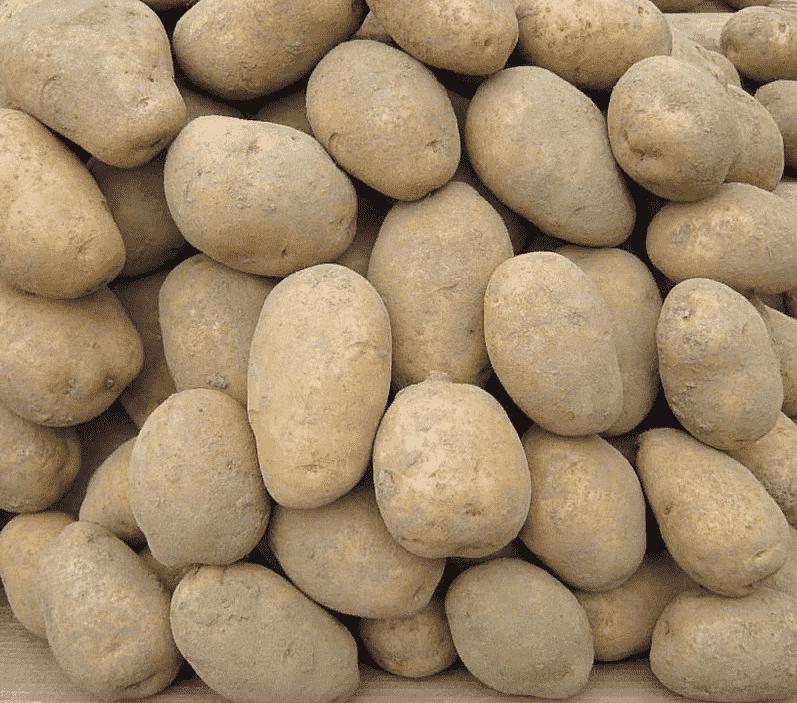 Картофель удача: характеристика сорта - подробная информация!