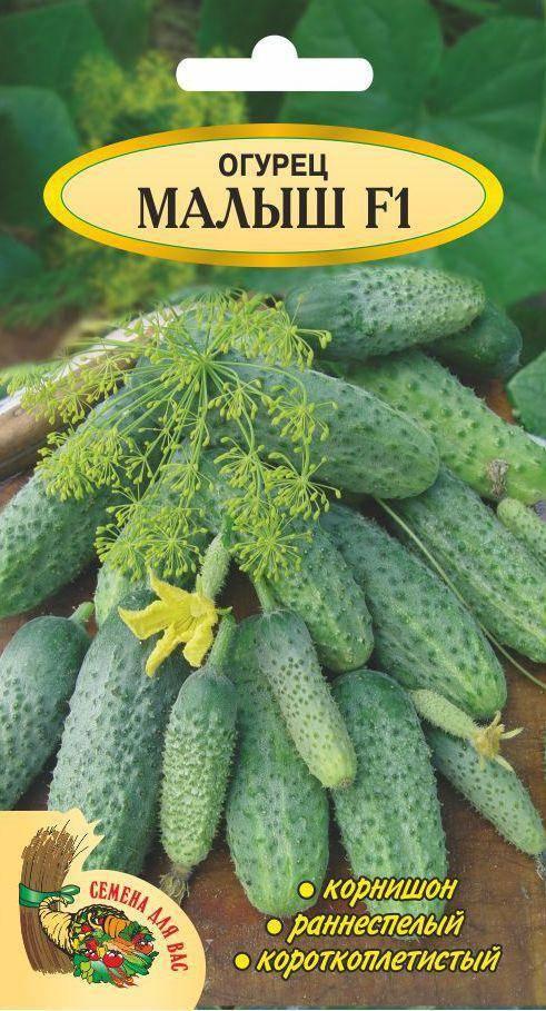 Гибрид огурцов «сахарный малыш f1» с длительным периодом плодоношения: фото, видео, описание, посадка, характеристика, урожайность, отзывы