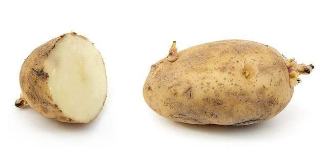 Можно ли сажать картофель из магазина, и подходит ли он для выращивания на участке?