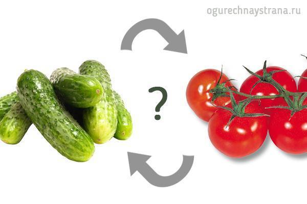 После чего можно сажать помидоры после каких культур