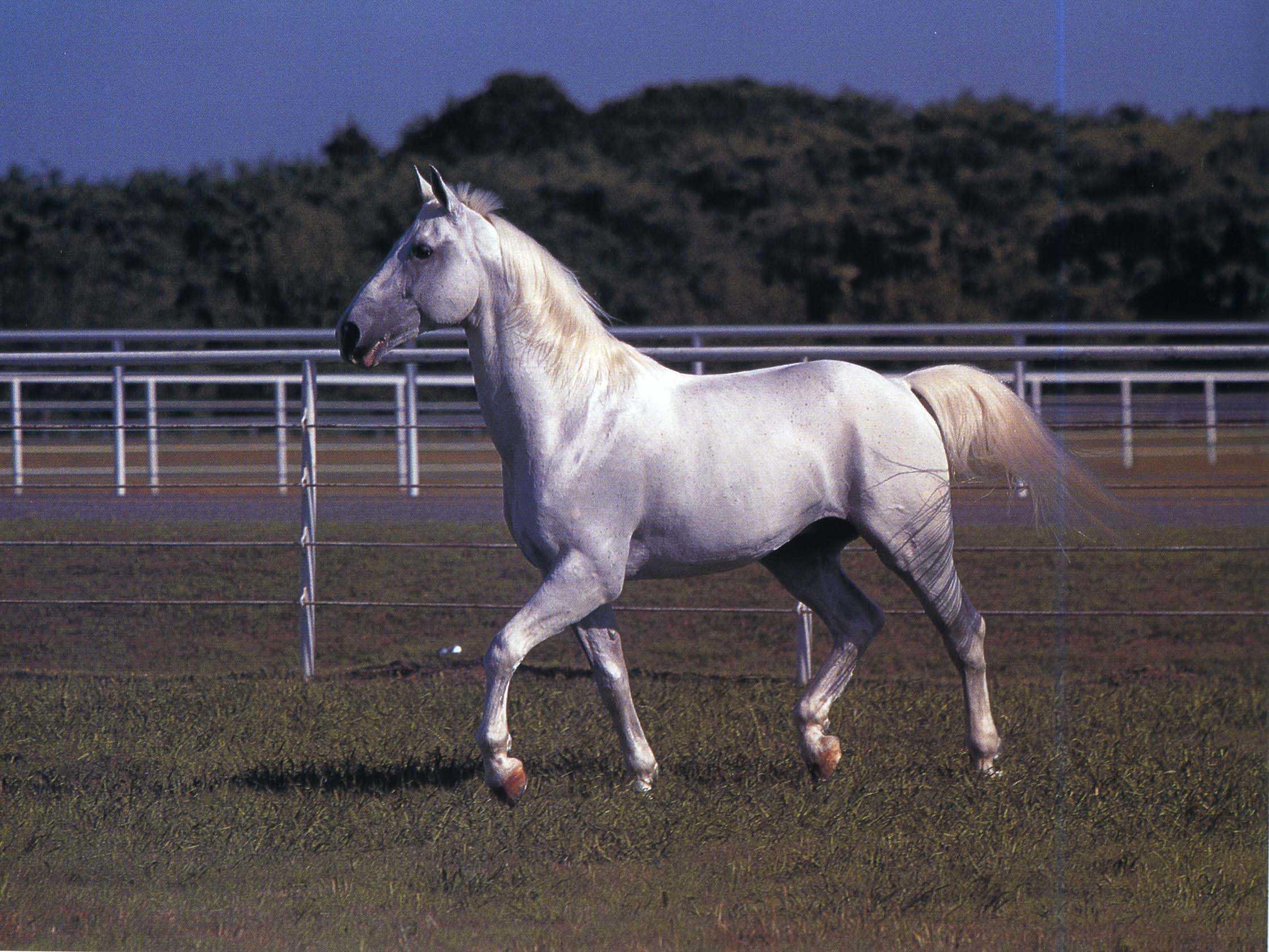 Виды лошадей и их краткая характеристика