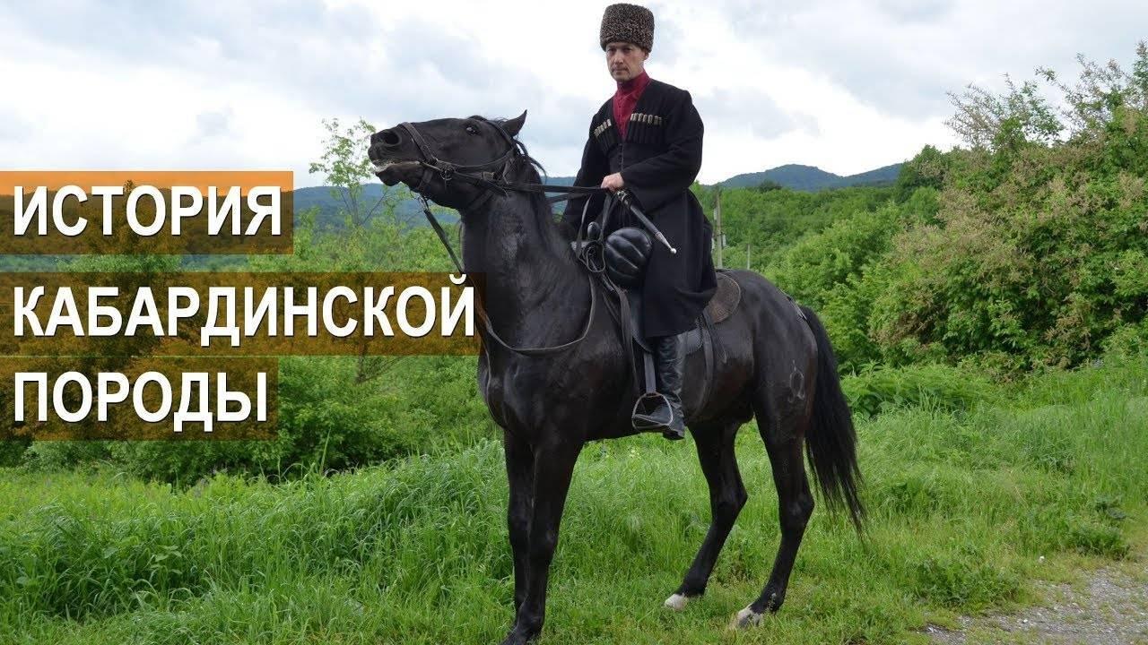 Кабардинская порода лошадей