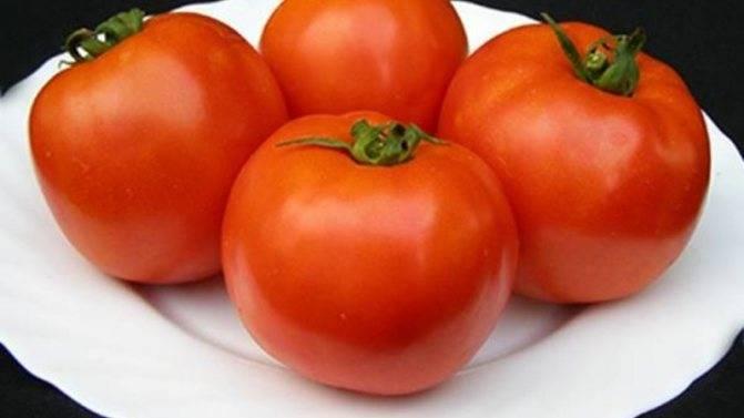 Томат сайт: описание, отзывы, фото, характеристика    tomatland.ru