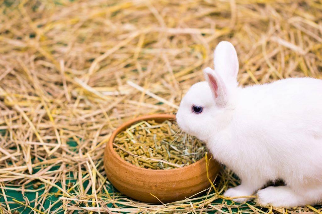 Можно ли кроликам укроп: в чём польза и вред, как правильно давать