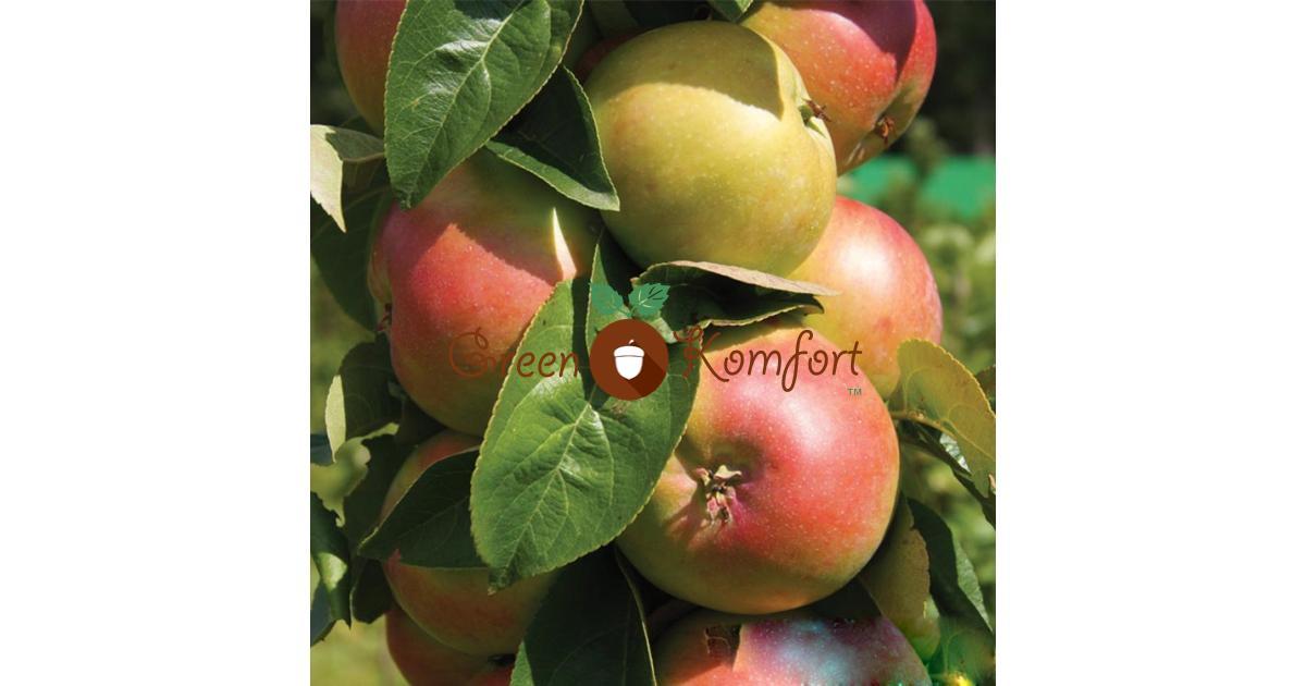 Колоновидные яблони: описание, посадка и уход