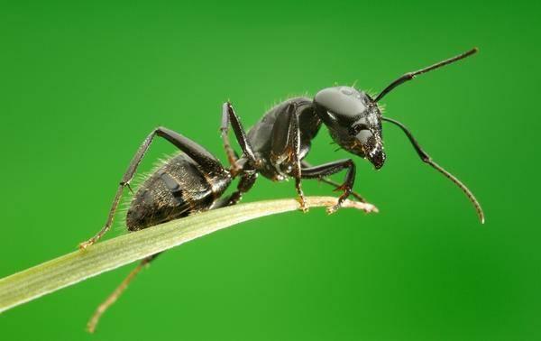 Как бороться с муравьями на деревьях в саду