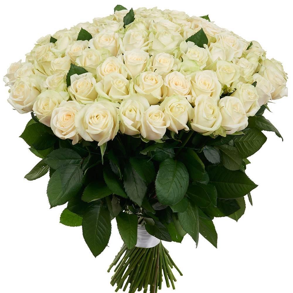 Юрий шатунов - белые розы