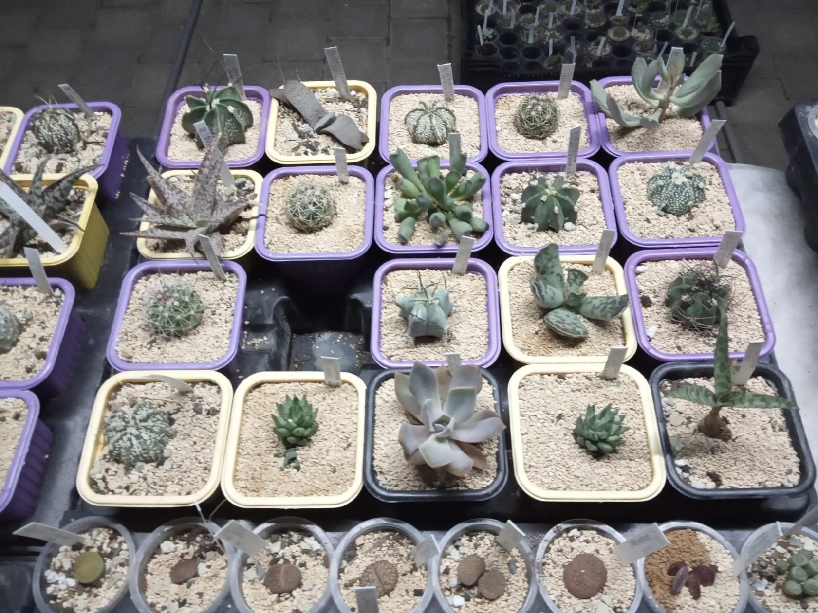 А у вас уже есть кактус? - кактус, кактусы, домашние растения,