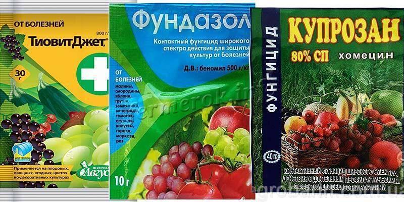 Защита винограда от болезней и вредителей: фунгициды и другие средства от грибка