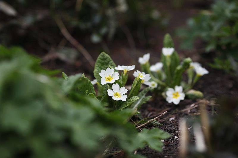 Грядки без прополки. 3 способа борьбы с сорняками весной и летом. как организовать грядки без сорняков