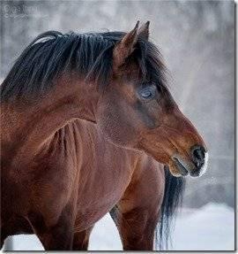 Все о гнедых лошадях