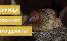 Убой птицы в промышленных масштабах или как убивают кур на птицефабрике?