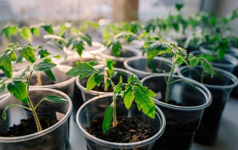 «эпин» — стимулятор роста растений