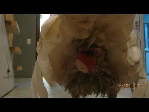 О воспалении и выпадении у курицы яйцевода: что делать (лечение сальпингита)
