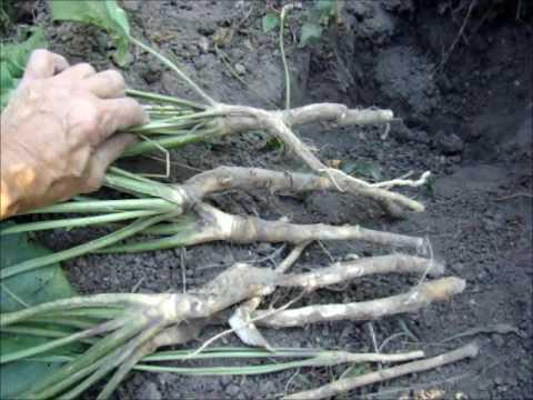 Огород весной и летом: обработка от вредителей и защита овощей