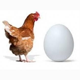 Все о комбикорме для кур: какой выбрать и как приготовить самостоятельно