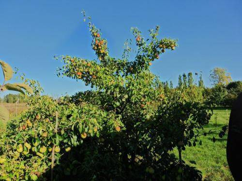 Проблемы цветения вишни: причины, методы решения, профилактика