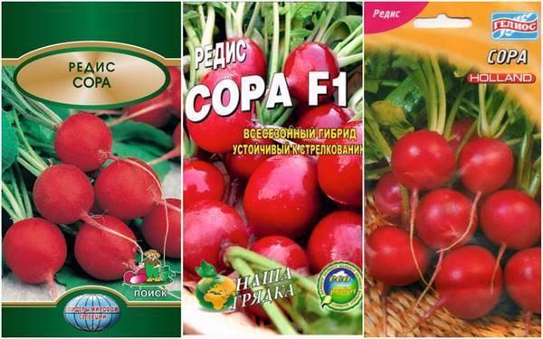 Разнообразие овощей: все о полезном корнеплоде редисе
