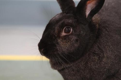 Кокцидиоз у кроликов - препараты для лечения и профилактики