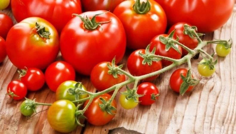 Как можно применять янтарную кислоту для удобрения томатов?