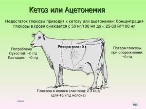 Кетоз — неприятная болезнь буренок с ароматом ацетона