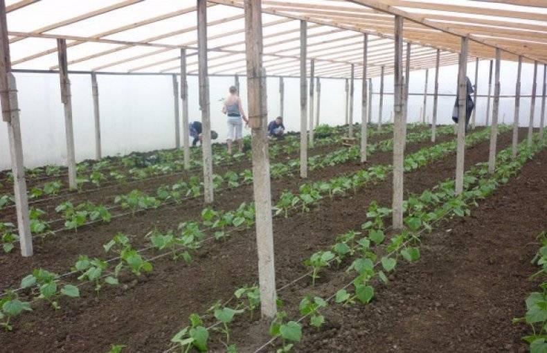 Когда сажать огурцы на рассаду для открытого грунта: как правильно сеять семена, подготовка грядки к высадке, а также правила пересадки и ухода за саженцами