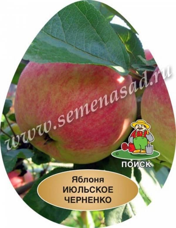 Сорта яблонь для подмосковья и средней полосы россии: фото, описание и характеристика