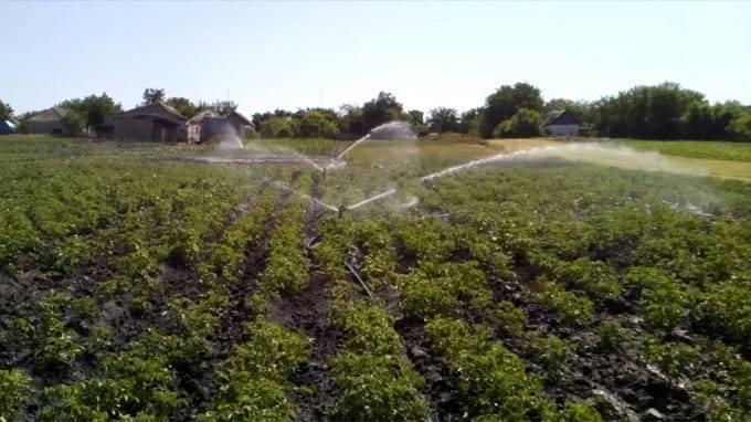 Как часто поливать картошку после посадки. нужно ли поливать картофель. как сделать комфортные условия для картошки
