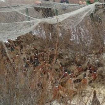 Размеры ловушки для фазана своими руками