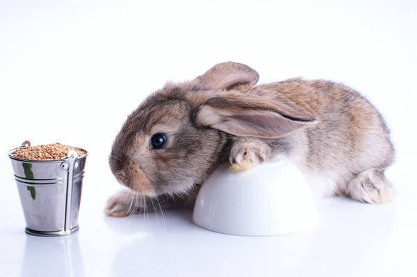 Чем лучше кормить кроликов — разбираем популярные продукты