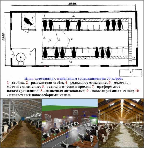 Коровник на 100 голов: проект