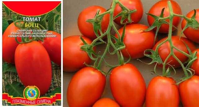 Томат большая мамочка: отзывы, фото, урожайность, описание и характеристика | tomatland.ru