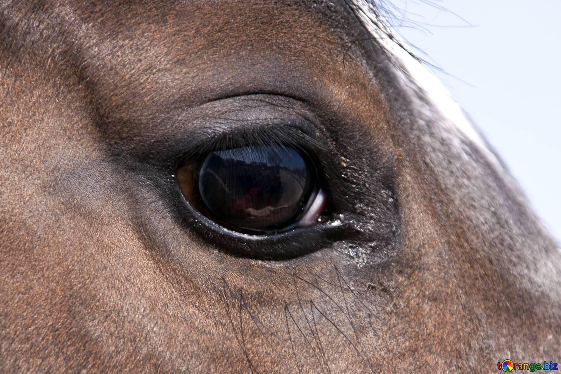 Кириллица  | варёный глаз лошади и другие «деликатесы», которые ели татаро-монголы