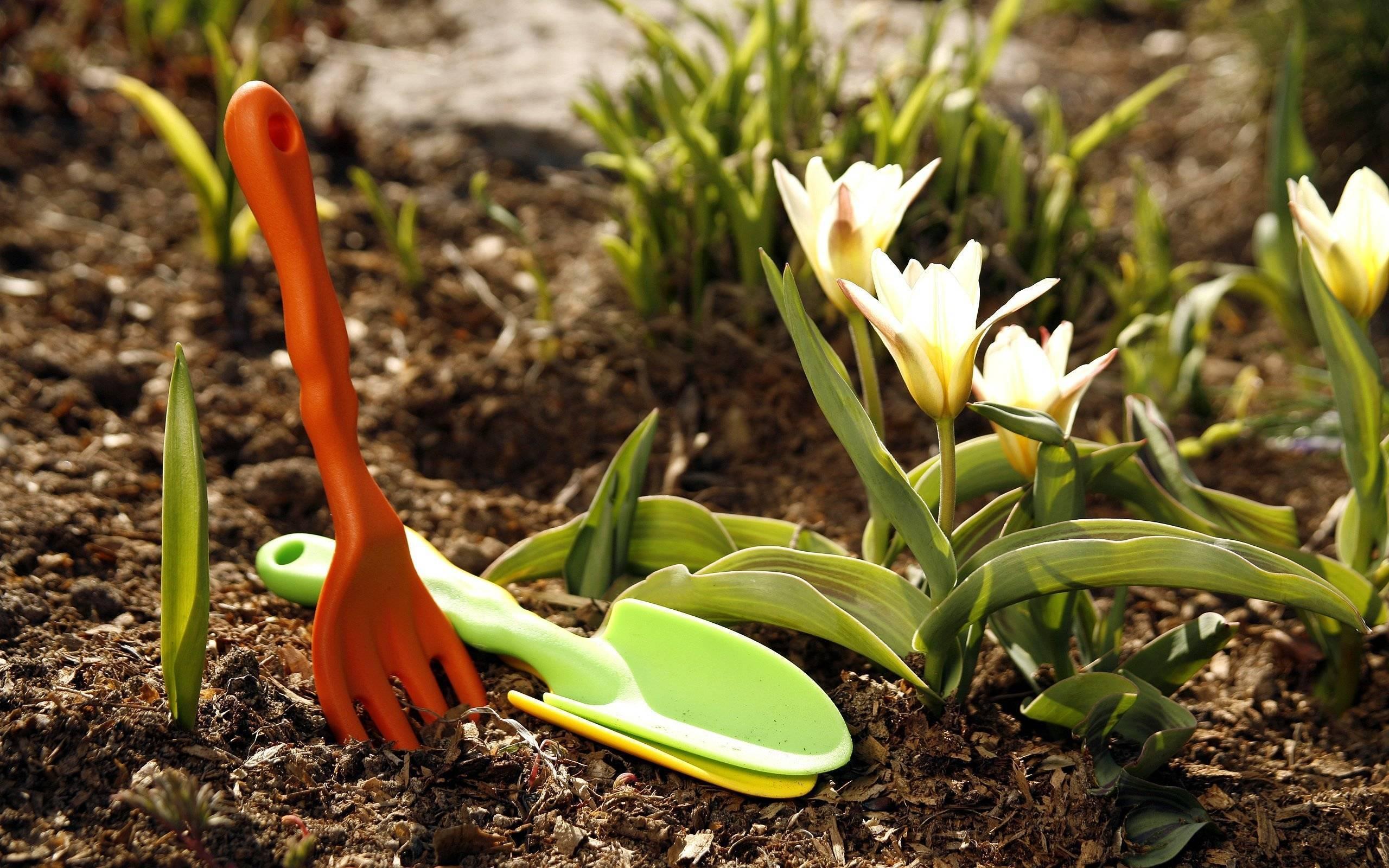 Работы в марте в саду и огороде: подробный список дел от «зеленой грядки»