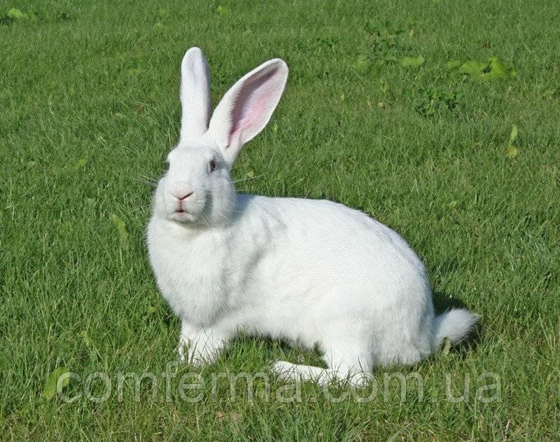 Комбикорм для кроликов: какой лучше, как сделать своими руками в домашних условиях