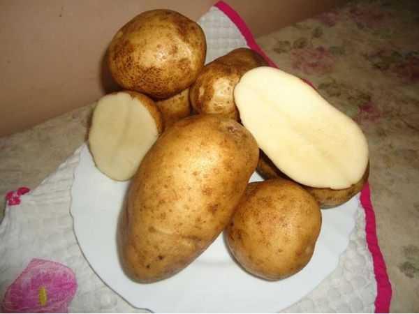 Сорт картофеля тимо: описание и характеристика, отзывы